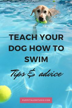 Dog paddle 101: teach your dog how to swim!  Some dogs just LOVE to swim, while others run away by the thought of it. In fact, some breeds cannot swim at all! So, if you are the proud owner of a Bulldog, do not even think about it! Other breeds, like Retrievers, were bred for waterfowl hunting. So swimming feels natural to them. Here are some great tips to introduce your dog to water and teach them how to swim properly. Click through to read more!