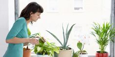 11 Plantas pequenas para ter dentro de casa