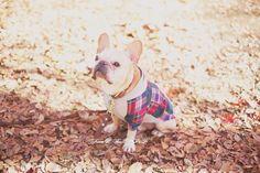Yoyogi Park。(&発表)|フレンチブルドッグ*パン, French Bulldog, Japan.