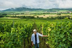Alsatian Wines Strike a Balance of Dry and Sweet