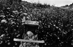 Larry Towell