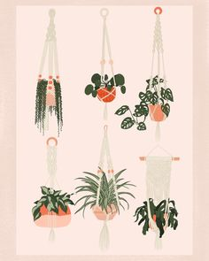 Jess (@jessprintdesigns) • Instagram photos and videos Plant Painting, Plant Drawing, Flat Design Illustration, Plant Illustration, Macrame Art, Macrame Design, Aesthetic Desktop Wallpaper, Iphone Wallpaper, Solid Color Backgrounds
