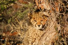 With this itinerary in hand #BestWildlifeSafarisinAfrica have something that shouldn't be missed. Know more @ https://www.northernmasailandsafaris.com/