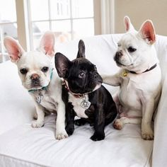 French Bulldog Love x 3 | Content in a Cottage