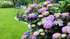 Hortensien richtig schneiden Whoever wants to cut hydrangeas is often unsure, since different cutting rules apply to the different types of hydrangeas. In this video we show you how to cut your hydrangeas properly in the garden. Front Yard Landscaping, Backyard Landscaping, Landscaping Ideas, Types Of Hydrangeas, Hydrangea Care, Plantation, Garden Cottage, Shade Garden, Amazing Gardens