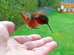 <3 <3 <3 <3 humming birds played such an important role in my childhood.... <3 <3 <3 <3 <3