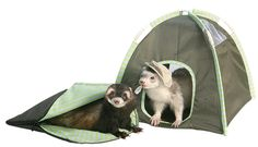 Pet Tent | 32 Things You'll Totally Need When You Go Camping