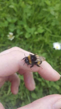 Image about green in cottage core by natalie on We Heart It Baby Animals, Cute Animals, Save The Bees, Cute Creatures, Cute Babies, Insects, We Heart It, Cottage, Pets