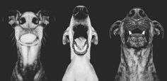 Photographer Elke Vogelsang specializes in people portraits, but dogs are a favorite...and who can blame her? With these cute faces and boundless love and energy, what's not to love? She gives a few tips to those starting out in pet photography.