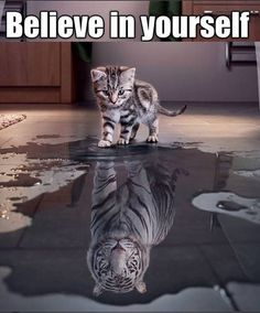 Never underestimate a kitty, kitties can roar like a tiger Animals And Pets, Baby Animals, Funny Animals, Cute Animals, Cute Kittens, Cats And Kittens, Big Cats, I Love Cats, Tier Fotos