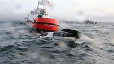 J34 Doublestuf reportedly suffered blunt force trauma to his head, possibly from a vessel strike.