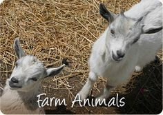 Hershey Farm Restaurant & Inn, lancaster  walking trails, pond, animals, play equipt.