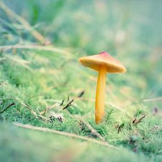 "Woodland Nature Photography Print ""Mushroom No. 3"""