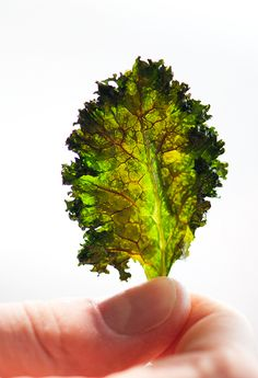 Baked kale chips recipe. I have a NuWave Ovean and I am so in love with it. For I can put these leaves on the rack and no less then 3-5 minutes later. I have beautiful no oil used flavored Kale leaves to munch on. Oh and yes, I have used every seasoning you can think of on these babies. Yummmmmmiiiieeee!!!