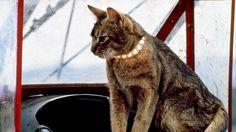 Unidentified Flying Object o Unknown Flying Object: Il gatto venuto dallo spazio