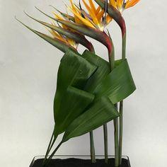 "75 Gostos, 4 Comentários - Neotropica Hawaii (@neotropicahawaii) no Instagram: ""NEOTROPICA HAWAII!! A brilliant design by @heatherdekok at our design program on the weekend in…"""