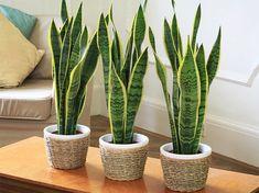 A solução para um ar puro dentro de casa pode estar nestas lindas plantas.