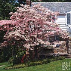 15 Best Sarah Images Plants Shrubs Garden