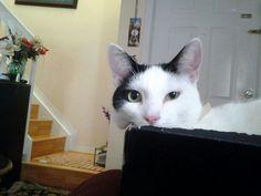 Me parece que he visto un lindo gatito :)