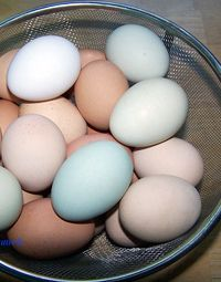 16 Fascinating Egg Facts