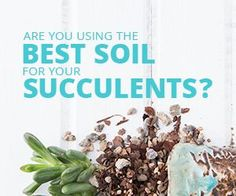 Find out what type of soil will help your succulents grow the best!