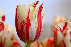 Conheça as 5 flores mais raras (e mais caras) do mundo
