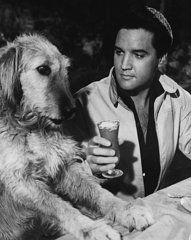 Music Art - Elvis Presley Has A Milkshake With Dog  by Retro Images Archive