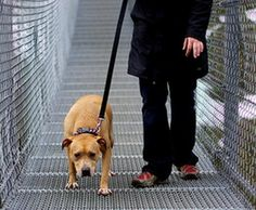 How Unpredictability Affects Dogs