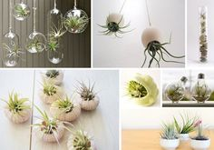 Air plants as unique decorations for a modern, minimalist wedding - images from Reynolds Garden Shop #modernweddingideas #minimalist