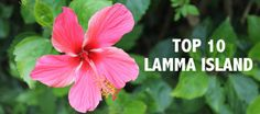 Retki Lamman Saarelle Hongkongiin.