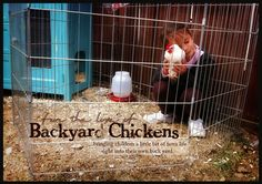 For the Love of Backyard Chickens - Chicken coop from dresser