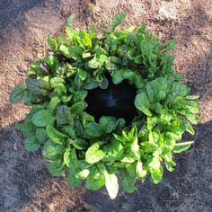 little crop circles: grow more vegetables, herbs and flowers in less space using less water