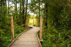 Lammassaari Boardwalk by Nomaji « Landscape Architecture Platform Outdoor Learning Spaces, Urban Nature, Contemporary Landscape, Nature Reserve, Outdoor Life, Landscape Architecture, Paths, Around The Worlds, Platform