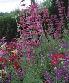 10 Ornamental Herbs: These perennial favorites add zest to the garden as well as to the kitchen. Follow this link to read more http://www.finegardening.com/plants/articles/10-ornamental-herbs.aspx