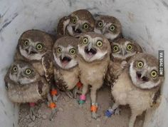 When you and your friends are so hungry and the food is coming... #Owl #Birds #Funny #Cute #Food #9GAG  @9GAGmobile