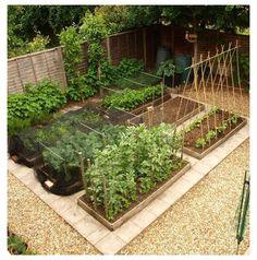 Vegetable Garden Planning, Vegetable Garden For Beginners, Backyard Vegetable Gardens, Vegetable Garden Design, Small Garden Design, Garden Plants, Shade Garden, Potted Plants, Indoor Plants