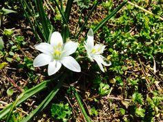 #nature#flowers#<3#Hungary#hiking#love#:)#white#green