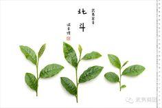 #北斗 #武夷岩茶 #wuyi #cliff #tea #beidou