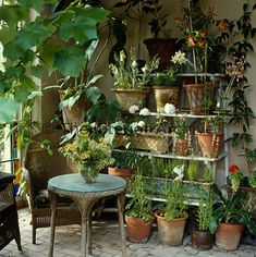 Terracotta pots are lined up on an etagere and a old wicker chair and matching table furnish a corner of the conservatory/Robert Kime Indoor Garden, Indoor Plants, Outdoor Gardens, Outdoor Bakers Rack, Old Wicker Chairs, White House Interior, Garden Nursery, Garden Furniture, Wicker Furniture