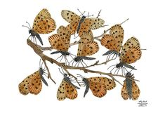 LARGE Butterfly Roost Print by GollyBard