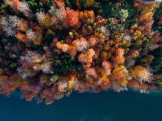 autumn everywhere ------------------------------------------ #airview #air_view #cinematography #dronefly #aerialfilming #droneheroes #nofilter #dji #instagram #dronegear #switzerland #aerialphoto #drones #dronebois #dronehub #djiinspire1 #PICOFTHEDAY #droneartwork #dronelife #dronbois #droneporn #dronesEtc #aerialphotography #inspire1 #djicreator #photooftheday #uav #aerialprofilms #instaphoto #snapair pilot: @air_view by air_view