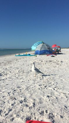 Fort Desoto State Park, Fl. Always entertaining even when doing nothing on the beach