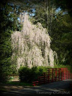 Beautiful! Dow Gardens 050713