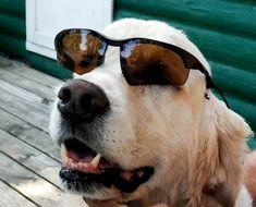 Picnic Time, Rescue Dogs, Affair, Adoption, Games, Link, Food, Foster Care Adoption, Essen