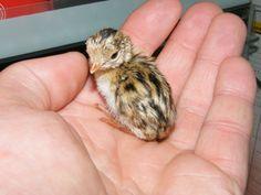 Owlbeard Chicken - Google Search