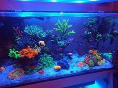 Groggy morning, because the nights are spectacular on the reef. #metrokat #eatsleepreef #allmymoneygoestocoral #reeflikekat