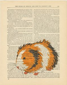 Guinea Pig Illustration on a book page