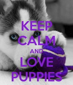 Keep calm and love puppies!