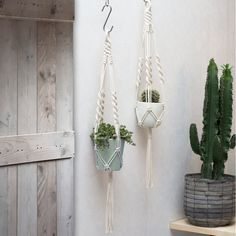 Macrame Plant Hanger / Plant Holder / Hanging door TeddyandWool