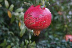 Pomegranate by Halil Şafak on 500px